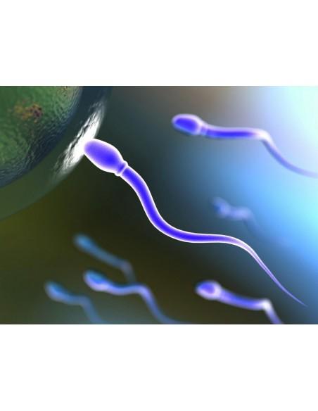 Material obstetricia y Ginecología